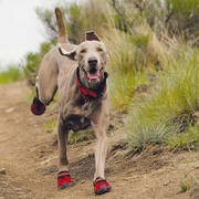 Buy dog running shoes for your puppy